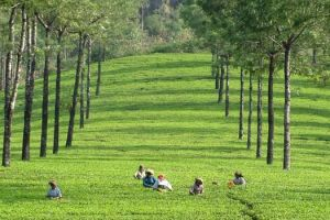 Bangalore - Mysore - Ooty - 5 Nights / 6 Days